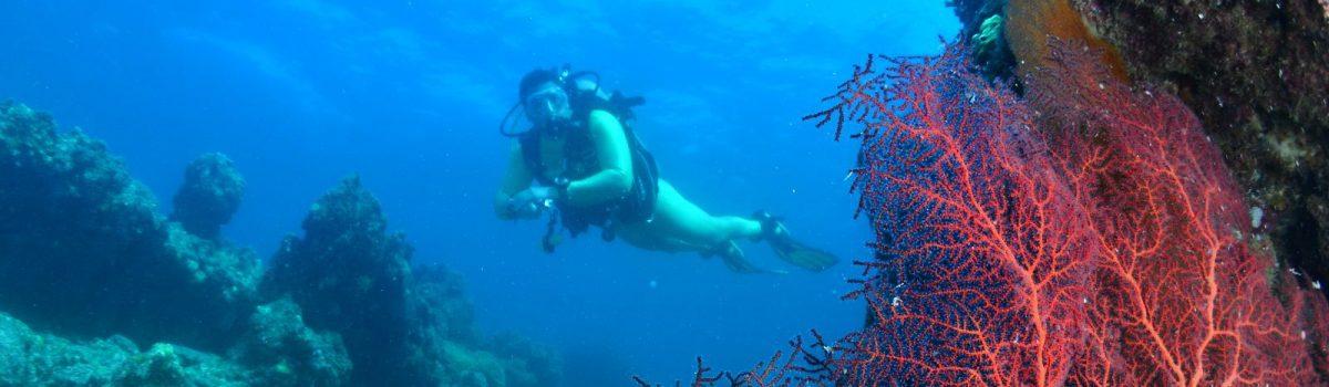 Homenaje a Francisco Lacase | Fotografiando el universo subacuático